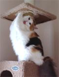 マスコット猫です